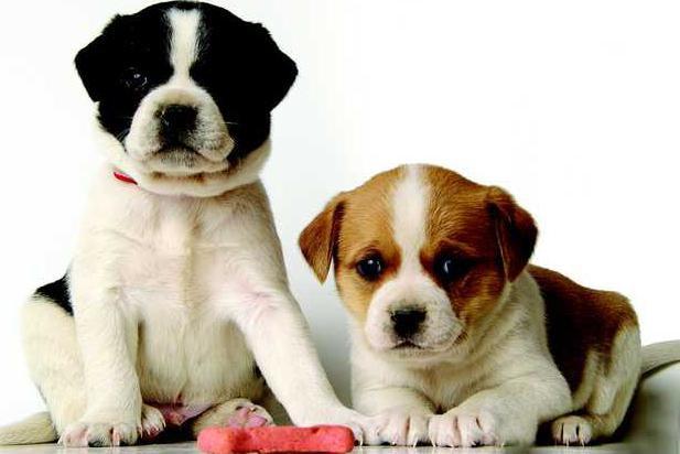 didis dogs.TIF