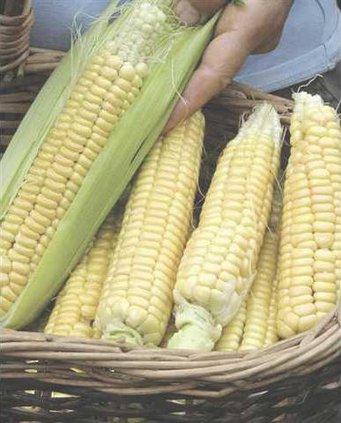 corn lt