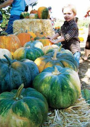 1014 Harvest 1