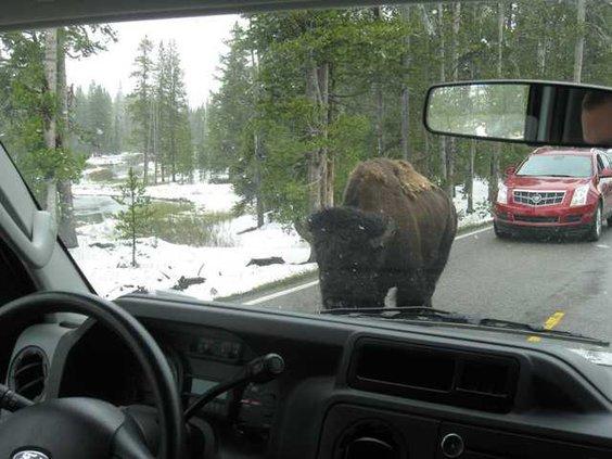 13 Yellowstone 2012