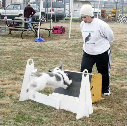 flyball-pic2