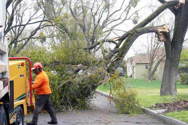 tree down pic1