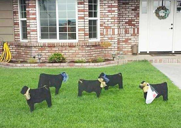 ffa cows