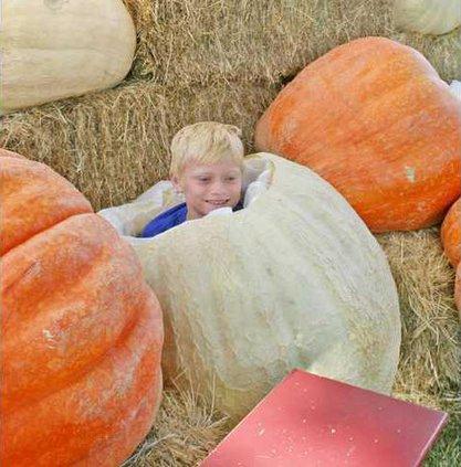 pumpkin-pic2