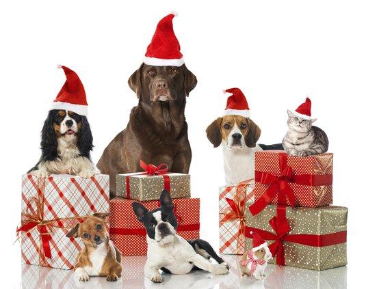 Pets holiday