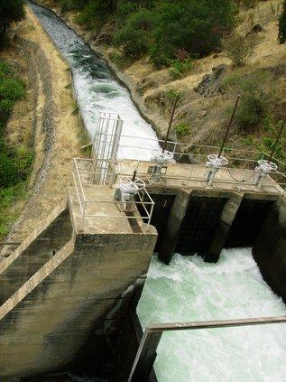 SSJID water leaves Goodwin.JPG